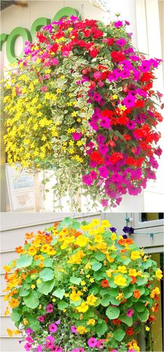 How to plant beautiful hanging baskets that last for months. Choose the best plants from these 15 designer plant lists for hanging flower baskets in sun or shade, plus easy care tips on soil, water and fertilizer for a healthy hanging basket! Hanging Plants Outdoor, Plants For Hanging Baskets, Outdoor Flowers, Patio Plants, Hanging Flowers, Hanging Pots, Cool Plants, Diy Flowers, Plants Indoor