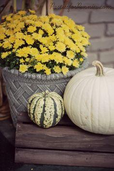 Fall Decorations | PartiesforPennies.com