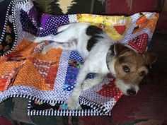 Val's Quilting Studio: Pets of Quilts: JACKSON!