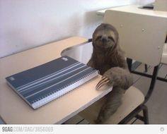 sloth school