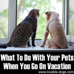 What To Do With Your Pets When You Go On Vacation	►►	http://lovable-dogs.com/what-to-do-with-your-pets-when-you-go-on-vacation/?i=p