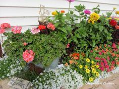 Zinnias!  Organized Clutter: Yard of Flowers: Garden Tour 2013