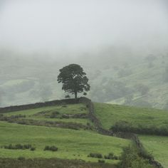 tocamelot: seems magical another era.  Lone tree, Hartrigg, Kentmere, Lake District National Park, England by Ministry