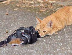 Jagen auf andere Art und weiße :)