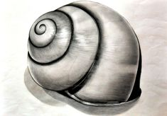 Shell Drawing by Namiiru on DeviantArt Pencil Shading, Pencil Art, Pencil Drawings, Starfish Drawing, Shell Drawing, Drawing Heads, A Level Art Sketchbook, Sea Life Art, Snail Shell