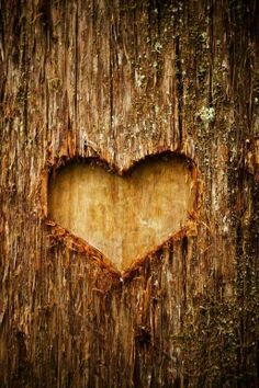 ♡ carve a heart into the tree at the reception and ceremony