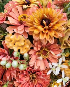 Energetic colors for summer.  What do you think of either warm mustard and/or salmon as an accent color?  Flowers grown by Love 'n Fresh Flowers.