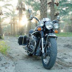 "93 gilla-markeringar, 2 kommentarer - Moe (@cyclegardenmotorcycles) på Instagram: ""Palm Ceiling!! #motoguzzieldorado #guzzieldorado #motoguzzipolice #guzzipolice…"" Moto Guzzi, Guzzi V7, S1000r, Super 4, Drawing Ideas, Motorbikes, Cali, Motorcycle, Classic"