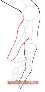 Как рисовать руку человека для начинающих по шагам