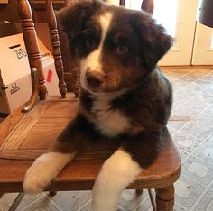 Made by De — Baby Quinn at 3 months. Happy Nationsl Puppy Day!...