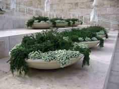 Prostrate rosemary grown with alyssum.just 2 elements, yet amazingly effective. Wonderful in a contemporary setting. (front porch plants in urns) Outdoor Planters, Garden Planters, Succulents Garden, Outdoor Gardens, Container Plants, Container Gardening, Pot Plante, Small Gardens, Indoor Plants