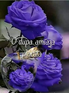 Good Morning, Rose, Flowers, Plants, Bom Dia, Buen Dia, Pink, Bonjour, Roses