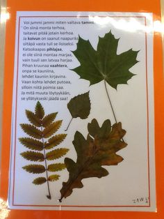 Tutustuimme lähimetsän puihin. Science Art, Science And Nature, Tree Forest, Teacher Resources, Preschool Activities, Geography, Trees, Natural, Books