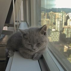animals and pets animals and pets funny animals and pets funny hilarious so cute animals and pets puppies animals and pets dogs animals and pets memes Cutest Animals On Earth, Animals And Pets, Funny Animals, Funny Cats, Kittens Cutest, Cats And Kittens, Cat Aesthetic, Cute Little Animals, Cute Creatures