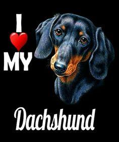 Dachshunds, Doggies, Dachshund Art, Dog Food, Bowie, Labs, My Love, Painting, Portrait