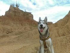 Cani in the desert