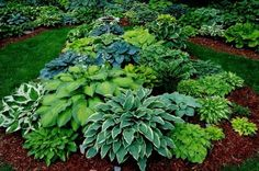 Beautiful variations of Hostas. Hostas are one my favourite plants and so easy to care for! Hosta Plants, Shade Plants, Shade Perennials, Outdoor Plants, Outdoor Gardens, Landscape Design, Garden Design, Landscape Bricks, Jardin Decor