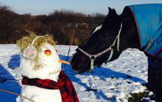 Your horses in the snow [PICS] - Horse & Hound Horse Pictures, Professional Photographer, Friends Family, Snow, Horses, Winter, Funny, Cute, Animals