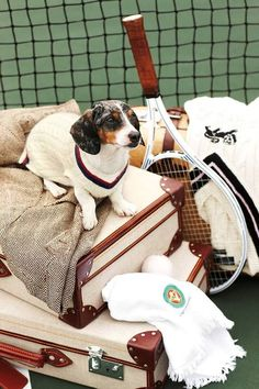 Arthur was packed and ready to go back to prep school this year. He loves to play tennis, but every now and then, he grabs the ball with his mouth. ~ Houston Foodlovers