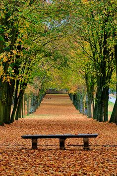 Autumn Park in Chamarande, France