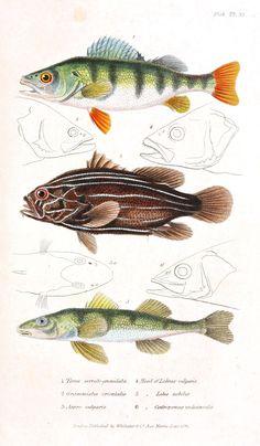 Fish educational
