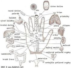 Acupuncture points or acupressure points connect meridians to specific internal organs. Acupuncture points are stimulated to treat deseases. Acupuncture For Weight Loss, Acupuncture Points, Acupressure Points, Natural Cures, Natural Healing, Hand Reflexology, Acupuncture Benefits, Shiatsu, Mudras