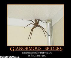 """This is more how I pictured the Grievers, like giant, squishy black spiders. This particular picture is humorous, but also reminds me of the quote """"if you ain't scared, you ain't human."""" This wasn't in response to the Grievers specifically, but still rings true."""