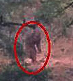Bigfoot Video, Bigfoot Photos, Bigfoot Sightings, Ghost Images, Bigfoot Sasquatch, Unexplained Mysteries, California Wildfires, Wild Fire, Greatest Mysteries