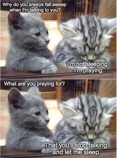 Special Pray silver lab temperament 37 Funny Animal Pictures You're Going To Love 35 Funny Animals Can't Stop Laughing Here Are 20 Animals That Think They're People. Funny Animal Memes Of The Day 27 Pics Grumpy Cat Smile Fu. Cat Jokes, Cute Memes, Crazy Funny Memes, Really Funny Memes, Funny Jokes, Fun Funny, Funny Stuff, Funny Friday Memes, Silly Memes