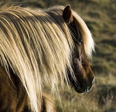 what a beautiful mane!!....YOU ARE A STRIKING .....BEAUTY!!