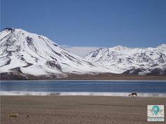 Lagunas Altiplanicas no Deserto do Atacama- Chile (Atacama Desert)