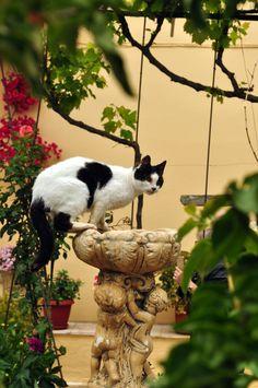 https://flic.kr/p/XevPXT   Gato de Mosteiro