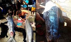 Big fish with odd patterns in its body caught by fishermen in Philippines - Can you decipher it? |UFO Sightings Hotspot
