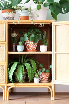 jungalow style planten by @myattic