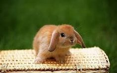 Image result for photos of baby rabbits