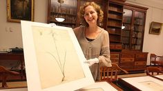 First Fleet drawings study may add artist to William Dawes' talents by Tim Barlass Sydney Morning Herald (2014, February 24)