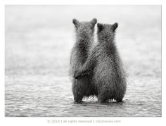 CUTEST THING YOU'LL SEE ALL DAY: baby bears.
