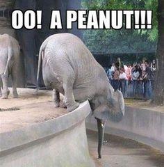 Peanut Spotted