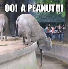 Lunch Time?:  must.....get.....peanut....