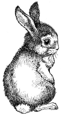 Holzstempel Motivstempel Mounted Stamp Hase Häschen Osterhase Artemio i. Easter Drawings, Animal Drawings, Art Drawings, Rabbit Drawing, Rabbit Art, Vintage Stickers, Lapin Art, Bunny Art, Bunny Bunny