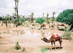 Marrakesh stad van de Koningen » Amanda Drost Fine Art Photography