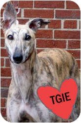 My name is Ram Swinger. I am a two year old greyhound, good with kids and other dogs and Bob won't let Jane adopt me.
