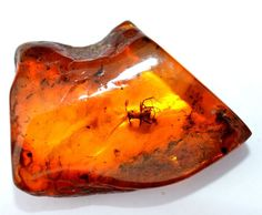 LOOSE DOMINICAN AMBER FOSSIL, WINGED ANT INCLUSION-FREE USA SHIP-
