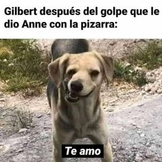 Estoy mal con esa serie Funny Spanish Memes, Spanish Humor, Funny Relatable Memes, Gilbert And Anne, Anne White, Gilbert Blythe, Anime Best Friends, Anne With An E, Enola Holmes