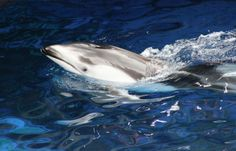 A dolphin and beluga whale died unexpectedly at an aquarium in Vancouver. The aquarium is now looking to replace these mammals, which will put more innocent creatures at risk of early death and a life of captivity. Demand the aquarium stop holding mammals captive.