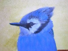 Acrylic Painting of a Blue Jay on watercolor paper.