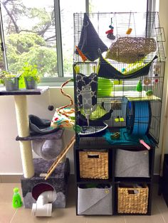I love it when new hammocks finally arrive! New cage setup :D #aww #cute #rat #cuterats #ratsofpinterest #cuddle #fluffy #animals #pets #bestfriend #ittssofluffy #boopthesnoot