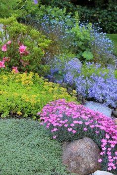 Beautiful rock garden plants. Pink dianthus, purple campanula, Basket of Gold Aurinia saxatilis, creeping thyme, azalea