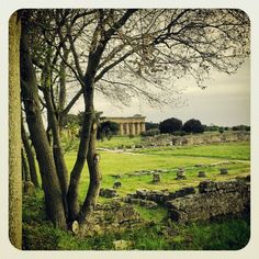 Paestum Temple - I just love it there