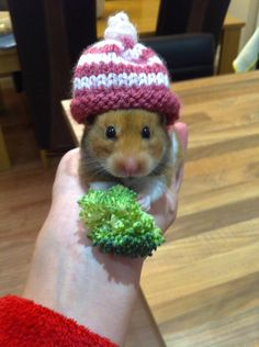 Hamster of the Month December 2014 -POLL NOW POSTED - Page 2 - Hamster Central